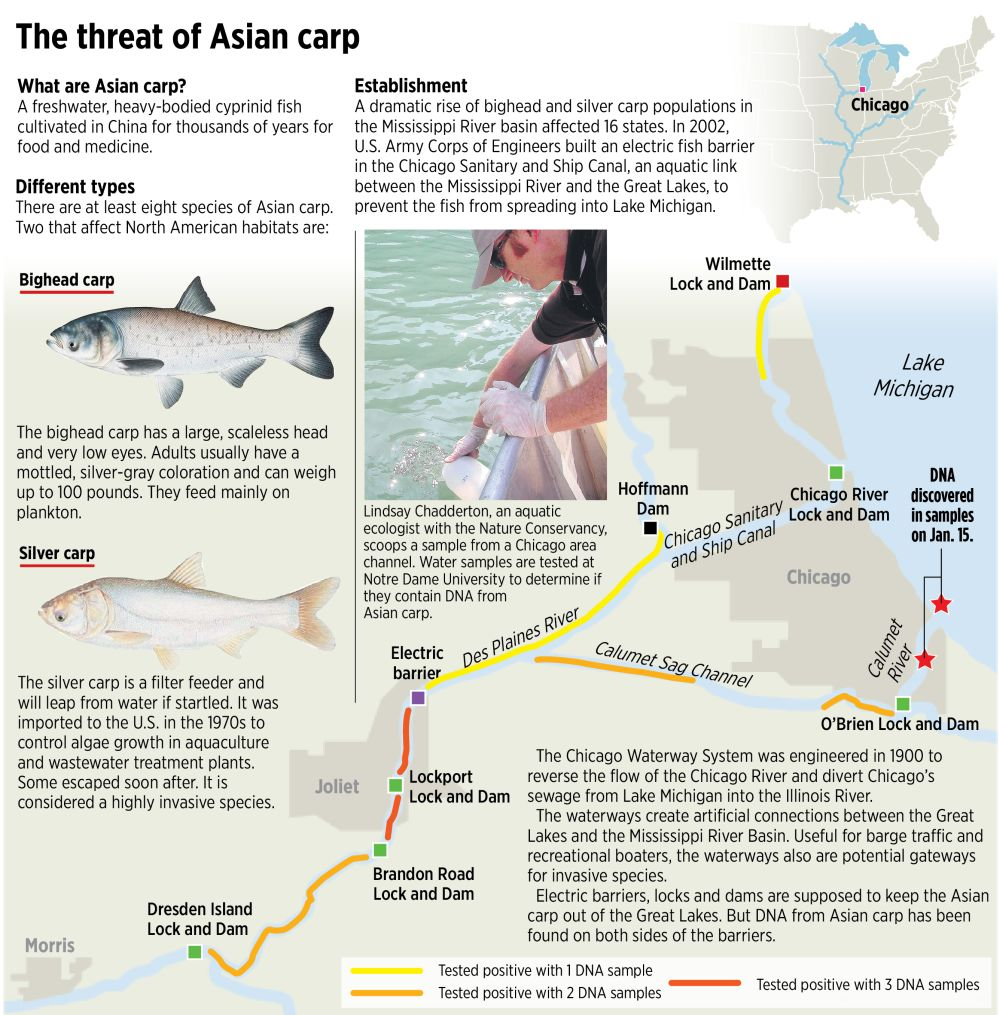 facts asian carp about the