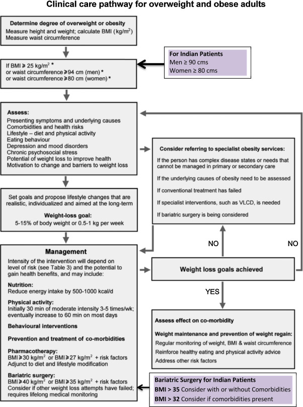 adult obesity care pathway